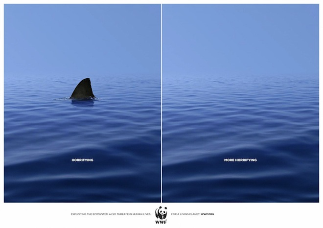 wwf-shark